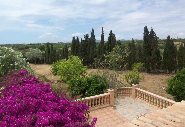 Blick über Teil des Gartens